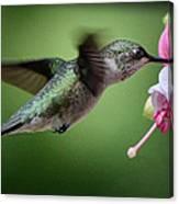Hummingbird Carbs Canvas Print