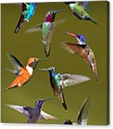 Hummingbird Collage Canvas Print