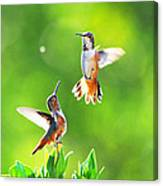 Hummingbird Dance  Canvas Print