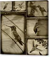 Hummingbird Family Portraits Canvas Print