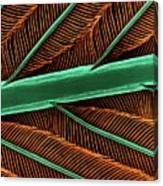 Hummingbird Feather Shaft Canvas Print
