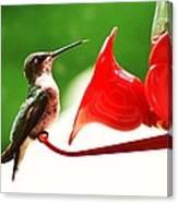 Hummingbird Feeder Canvas Print