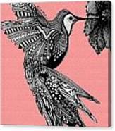 Hummingbird Flight 18 Canvas Print