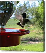 Hummingbird Flying To The Feeder Canvas Print
