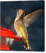 Hummingbird In My Window Canvas Print