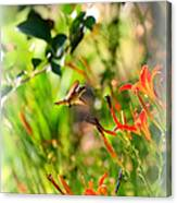 Hummingbird In The Daylilies Canvas Print