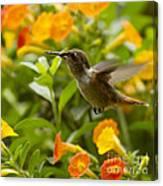 Hummingbird Looking For Food Canvas Print