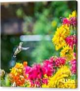 Hummingbird Moment Canvas Print