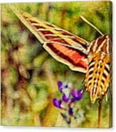 Hummingbird Moth In Wildflowers Canvas Print