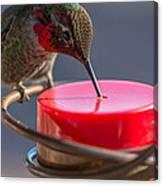 Hummingbird On Feeder Canvas Print
