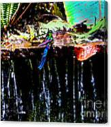 Hummingbird Shower Canvas Print
