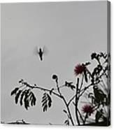 Hummingbird Silhouette I Canvas Print