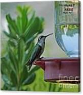 Hummingbird Still Life Canvas Print