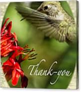 Hummingbird Thanks Canvas Print
