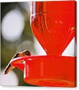 Hummingbird With Globes Canvas Print