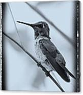 Hummingbird With Old-fashioned Frame 1 Canvas Print