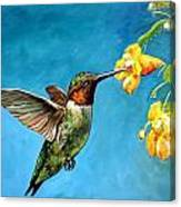 Hummingbird With Yellow Flowers Canvas Print