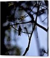 Hummingbirds 326 Canvas Print