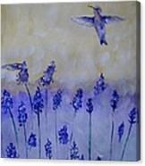 Hummingbirds Among Larkspur Canvas Print