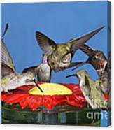 Hummingbirds At Feeder Canvas Print