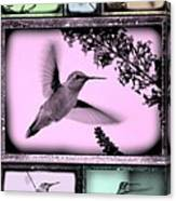Hummingbirds In Old Frames Collage Canvas Print