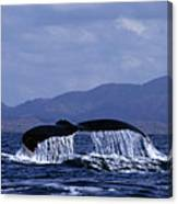 Hump Backed Whale Tail With Cascading Water Canvas Print