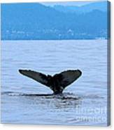 Humpback In Monterey Canvas Print