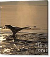 Humpback Whale Feeding Canvas Print