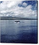 Humpback Whale Tail Slap Hawaii Canvas Print