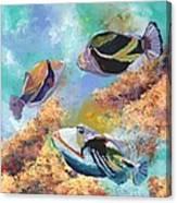 Humuhumu 3 Canvas Print