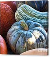Humungous Edible Gourds Canvas Print