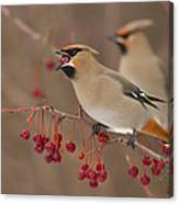 Hungry Birds Canvas Print