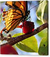 Butterfly And The Cherry Canvas Print