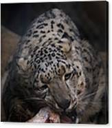 Hungry Leopard Canvas Print
