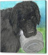 Hungry Newfoundland Dog Canine Animal Pets Art Canvas Print