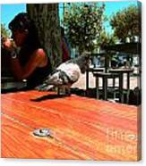 Hungry Pigeon At Mcdonalds Canvas Print
