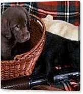 Hunters Puppy Dreams Canvas Print