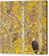 Hunting From An Aspen Canvas Print