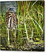 Hunting Heron Canvas Print