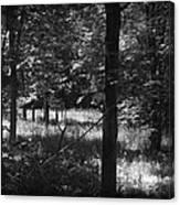 Hunting... Canvas Print