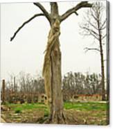 Hurricane Katrina Resurrection Tree Canvas Print