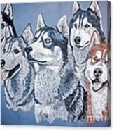 Huskies By J. Belter Garfunkel Canvas Print