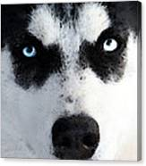 Husky Dog Art - Bat Man Canvas Print