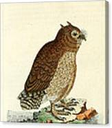 Hutum Owl  Canvas Print