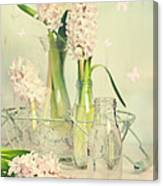 Hyacinth Arrangement Canvas Print