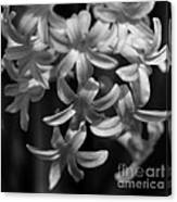 Hyacinth In Black And White Canvas Print