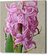Hyacinth Pink Canvas Print