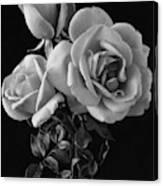 Hybrid Tea California Roses Canvas Print