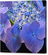 Hydrangea Blossom Macro Canvas Print