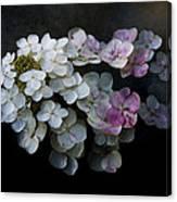 Hydrangea Dreams Canvas Print